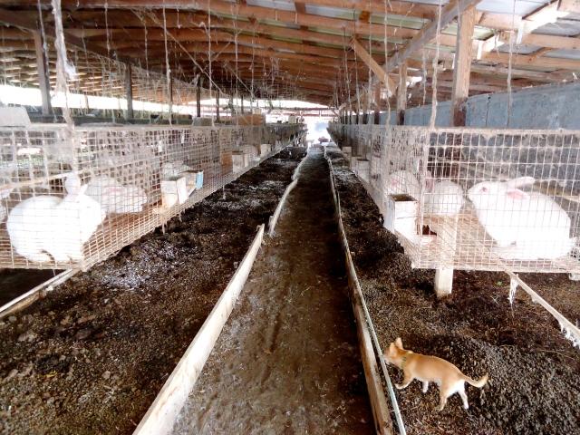HOW TO START A RABBIT FARMING BUSINESS IN NIGERIA | udeozochibuzo BLOG